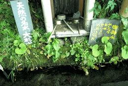 平成の名水百選に選ばれた大杉清水