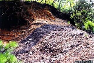 八戸地地区の石炭層