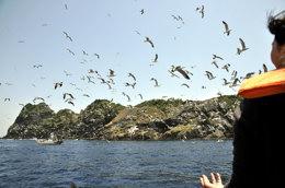 これもウミネコ・彼らの住処の沓島