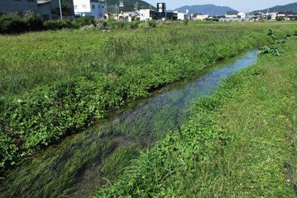 真名井の清水と池の間の水路